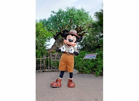 Safari Mickey at Animal Kingdom