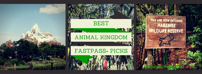 Animal Kingdom FastPass+ Picks