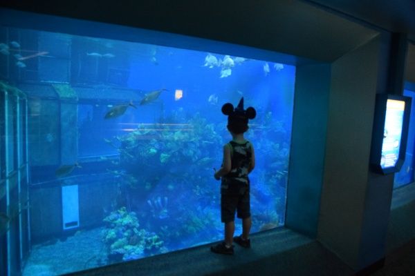 Connor's Epcot Must-Dos | Aquariums in The Seas with Nemo and Friends